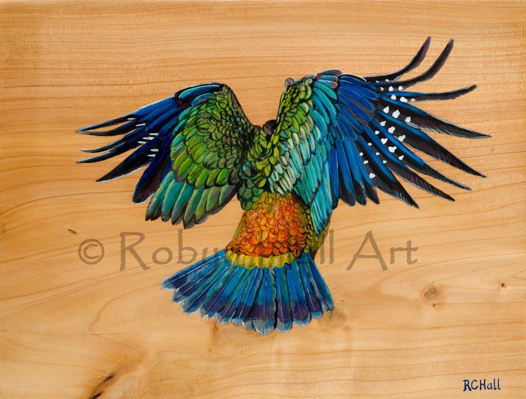 Kea Flying - Acrylic on Macrocapa