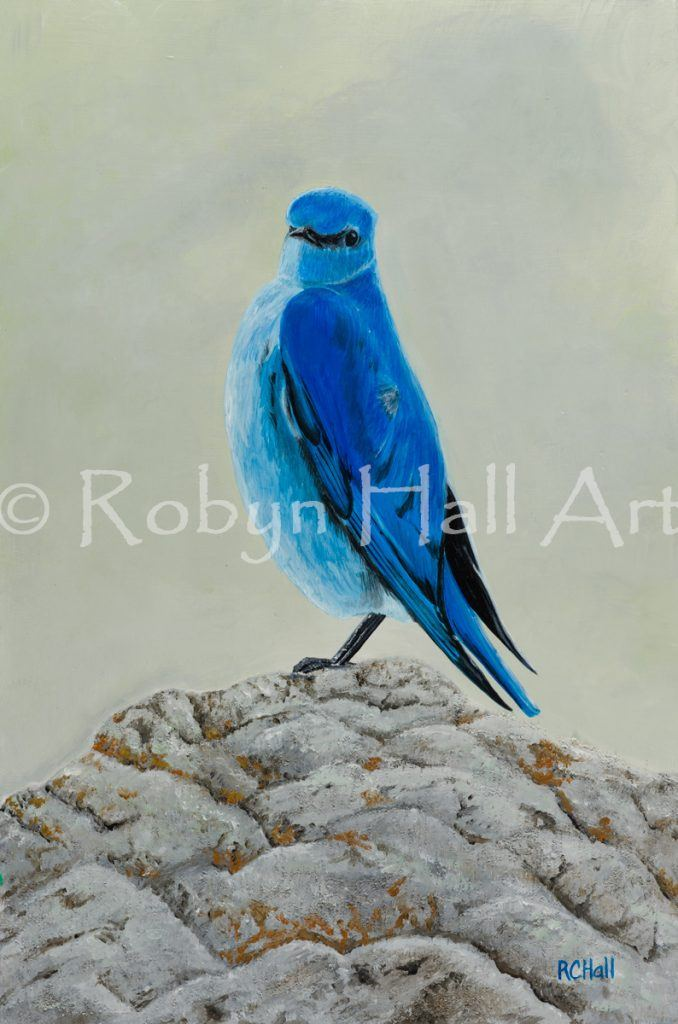Mountain Bluebird - Acrylic Painting 2016